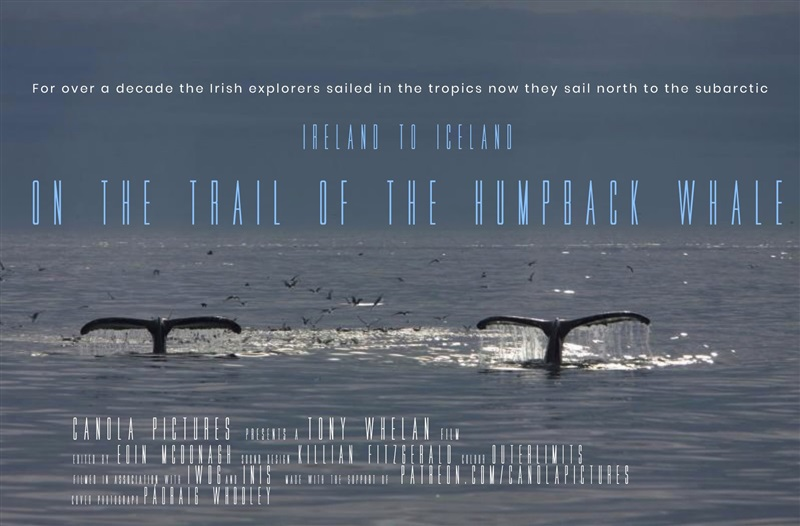 On the Trail of the Humpback Whale